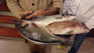 Appena pescate (e poi gustate) a Poros, Grecia marzo 2017