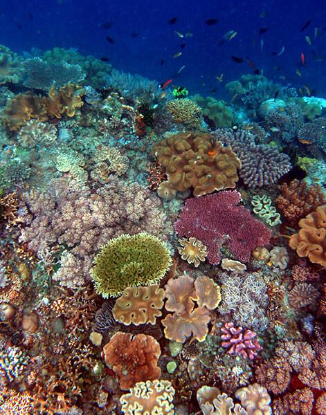 Componente delle creme solari uccide i coralli. Brutta notizia, e siamo noi a disperderlo nei mari, facendoci il bagno. Che fare? La scienza propone soluzioni pratiche.