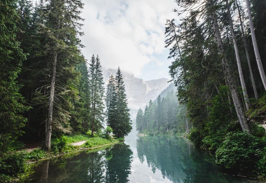 Trend profumi 2019, dai legni le essenze del momento ma sostenibili