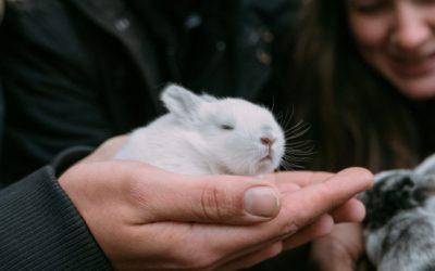 Gli Stati Uniti stanno per vietare i test sugli animali per i cosmetici?